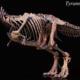 Tour Geologici o Paleontologici